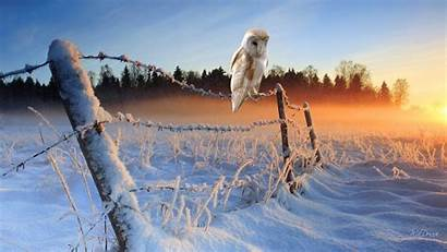 Birds Winter Nature Wire Sunrise Landscapes Animals