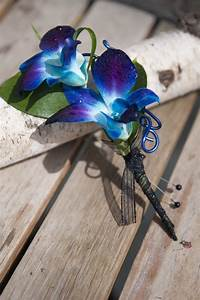 17 Best images about Blue Orchid Wedding | Flower ...