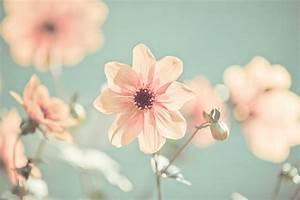 Cantinho de Paz: Flores Tumblr