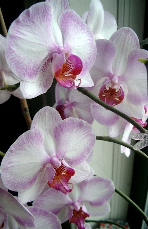 types of orchids types of orchids orchid flowers