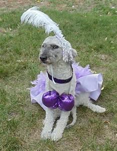 las vegas showgirl dog costume medium dog With dog clothes las vegas