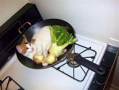 cuisine drole cuisiné drôle sur mignon com