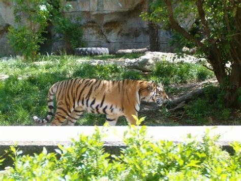 St. Louis Zoo (saint Louis)