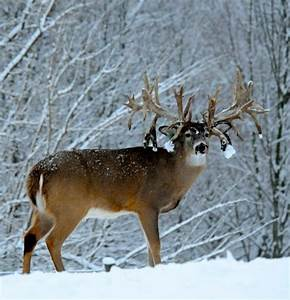 Non-typical freak | Deer Porn | Pinterest | Monsters, Hunt ...