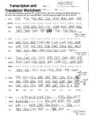 translation transcription worksheet biology high school