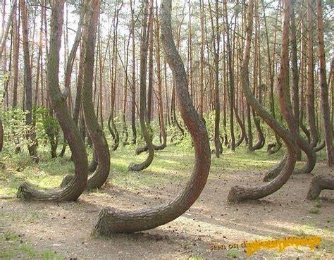 bäume als sichtschutz die besten 100 bilder in vielen kategorien b 196 ume verbogene b 228 ume