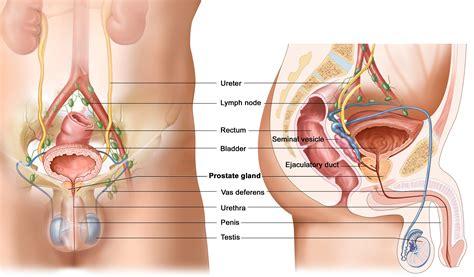 Hifu Pros And Cons Prostatecancerhifuca