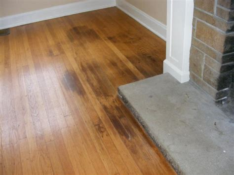 how to clean pet urine from wood floors