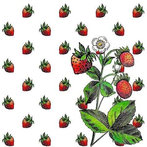 23 Best images about Strawberry Patterns on Pinterest