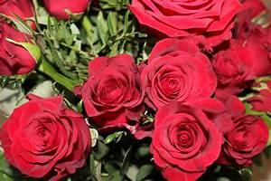 photos de fleurs roses rouges With chambre bébé design avec prix bouquet de rose fleuriste