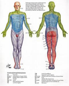 Dermatome | Massage | Pinterest | Health, Physical therapy ...