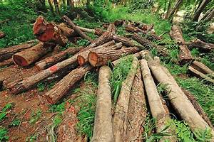 Deforestation In The Tropics Affects Climate Around The