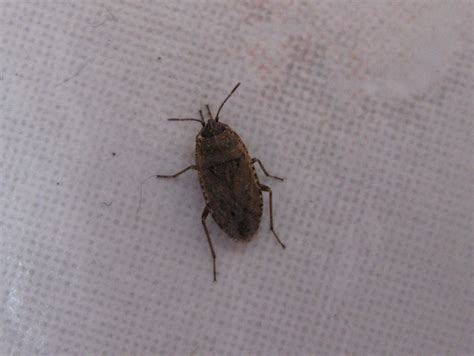 insectes non identifi 233 s dans ma maison