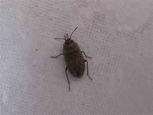 Insecte De Maison : insecte de maison gallery ~ Melissatoandfro.com Idées de Décoration