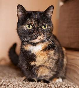 Captivating 80+ Smallest Cat In The World Guinness 2017 ...