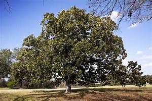 Magnolie Blüht Nicht : magnolie bl ht nicht woran kann 39 s liegen ~ Buech-reservation.com Haus und Dekorationen