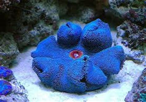Blue Haddoni Carpet Anemone Stanley Steamers Carpet Cleaning Tiles Suppliers Dubai Menards Outdoor All American Bakersfield Polypropylene Loop Pile Bissell Proheat 2x Cleaner Reviews Royal Extractor Parts Wool Padding