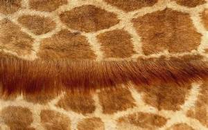 Giraffe skin wallpapers and images - wallpapers, pictures ...