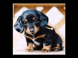 Funny Mother's Day Song (Munchkin the Dachshund) - YouTube