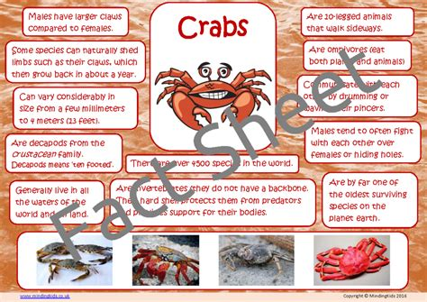 the sea activity pack mindingkids 594 | Crab Facts