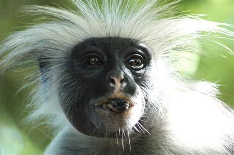 Zeig Mir Dein Bild by Zeig Mir Die Zunge Foto Bild Tiere Wildlife