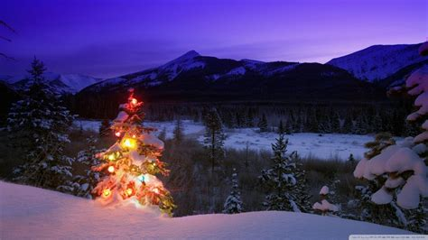 download christmas tree with lights outdoors in the