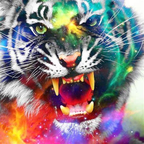tiger edit photography photo editing