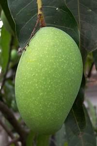 Paleo Mango-Coconut Ice Cream Recipe – ReWild University