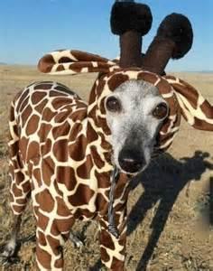 Funny Dog Halloween Costume Giraffe