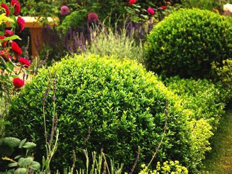 Straeucher Fuer Den Garten by Immergr 252 Ne Str 228 Ucher Was F 252 R Ihren Garten Das Beste Ist