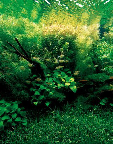 Amano Aquascape by Takashi Amano Nature Aquarium Aquascapes T A G