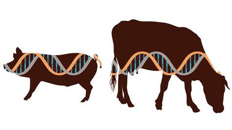 genetic engineerings age uc davis