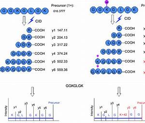 Ptm Identification By Mass Spectrometry  When A Peptide Is