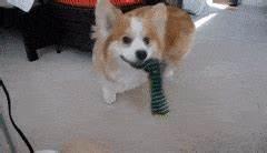 dog frisbee GIFs Search | Find, Make & Share Gfycat GIFs