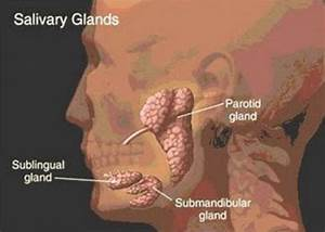 Diagram Of Infected Salivary Glands