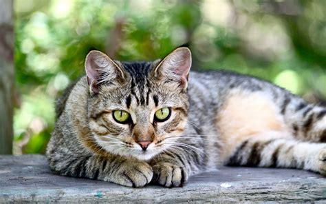 Pretty Iphone 6 Wallpaper Cat Full Hd Wallpaper And Background 2880x1800 Id 413702