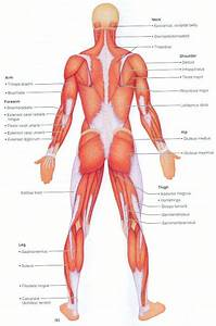 8 Best Images About Anatomy On Pinterest