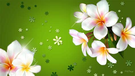 plumeria  colored flowers  bright green