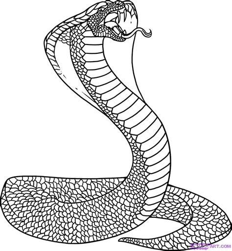 King Cobra Snake Drawing At Getdrawingscom Free For