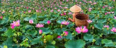 lotus vietnam lisa kristine