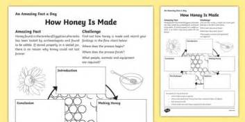 honey   worksheet worksheet worksheet