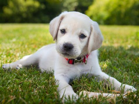 dog training services nashville dog wizard dog