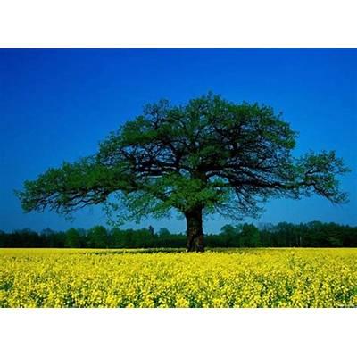 beautiful-tree-wallpaper-hd-23 - ForestNation
