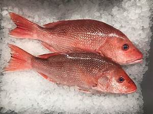 Red Snapper | Locals Seafood