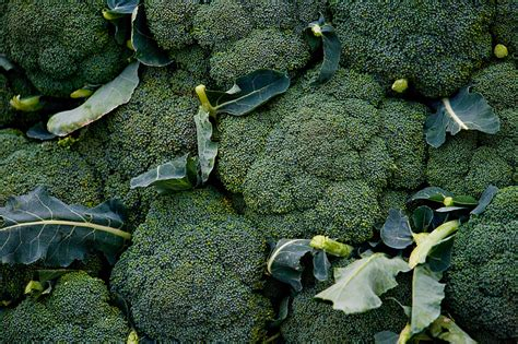 broccoli planting growing  harvesting broccoli plants