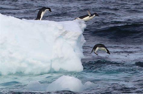 melting  antarctica  worst   years news al