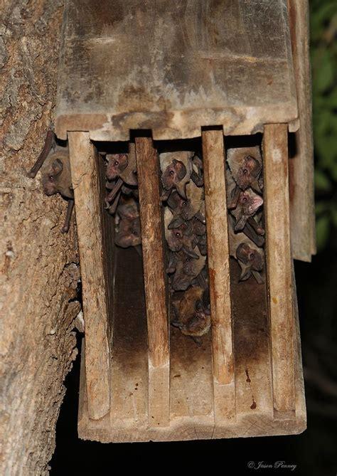 images  bat  bird houses  pinterest