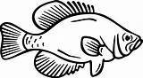 Fish Crappie Silhouette Clip Clipart Coloring Transparent Library sketch template