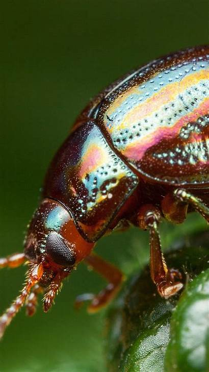 Insect Beetle Wallpapers Iphone