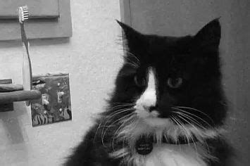 henri the cat 17 best images about henri the existential cat such a